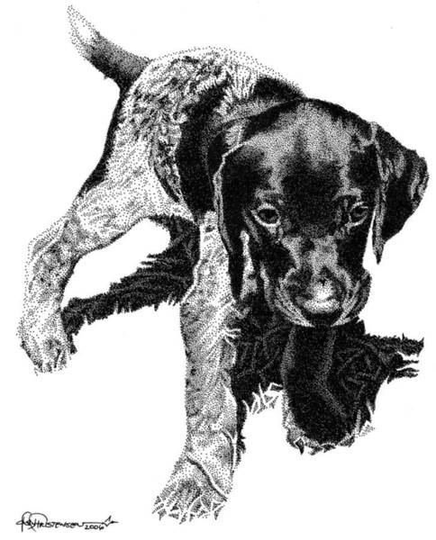 Poster featuring the drawing German Shorthair by Rob Christensen