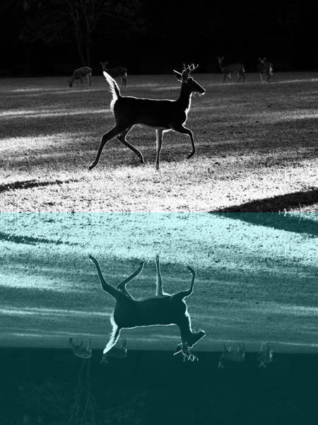 Glowing Buck Reflection Poster