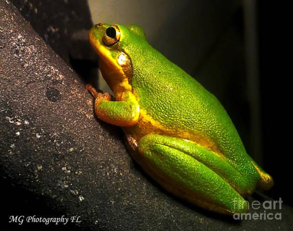 Gold Flake Frog Poster