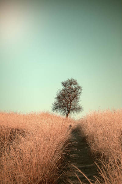 Grass And Path Poster