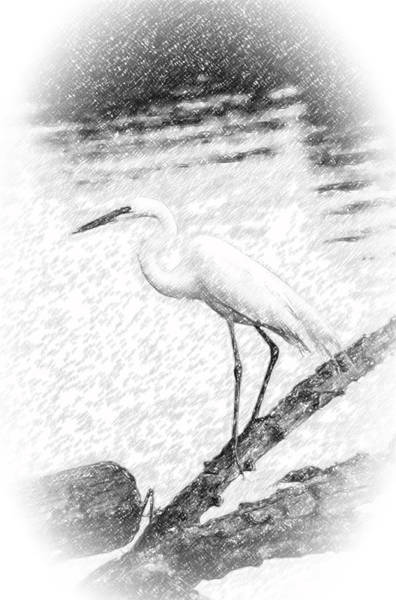 Great Egret Fishing Pencil Sketch Poster