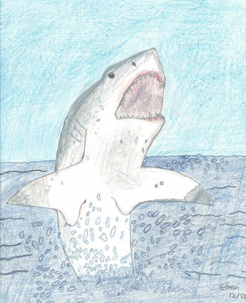 Poster featuring the drawing Great White Breaching by Fred Hanna