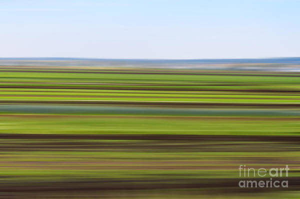 Green Field Abstract Poster