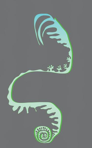 Green Spiral Evolution Poster