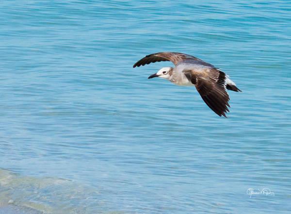 Gull At Lido Beach IIi Poster