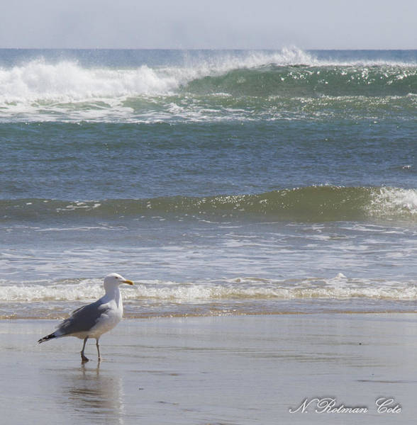 Gull With Parallel Waves Poster
