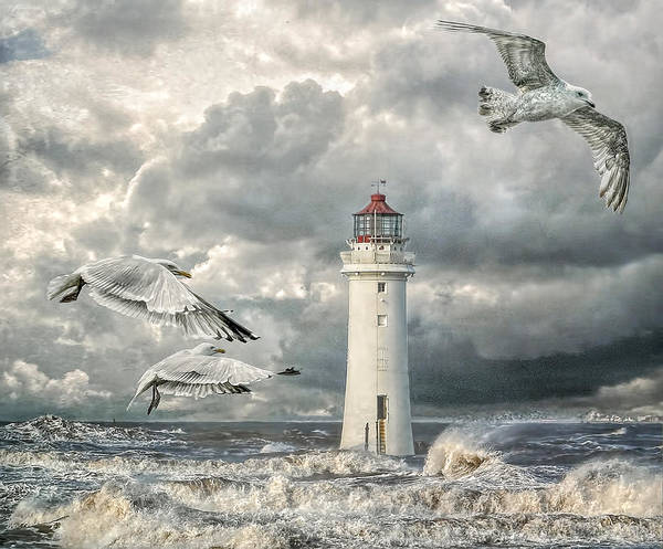 Gulls At Perch Rock Poster