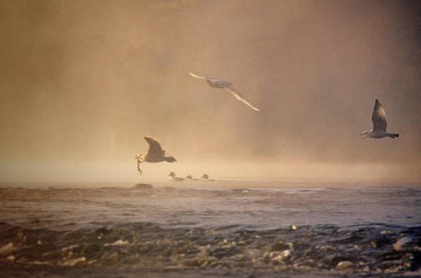 Gulls In The Fog Poster