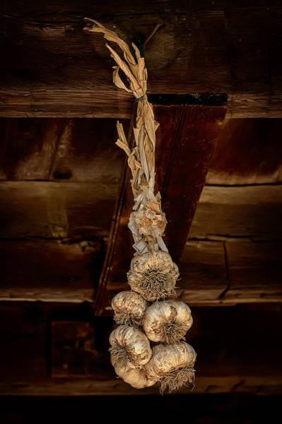 Hanging Garlic Poster