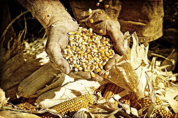 Harvest Of Plenty Poster