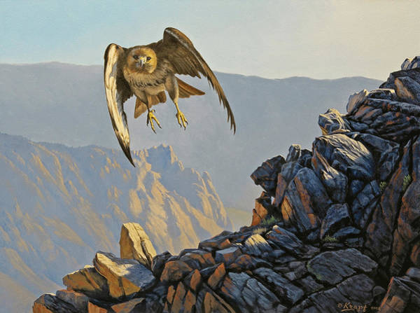 Hawk Above Beartooth Pass Poster
