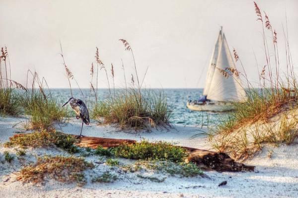 Heron And Sailboat Poster