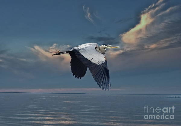 Heron Night Flight  Poster
