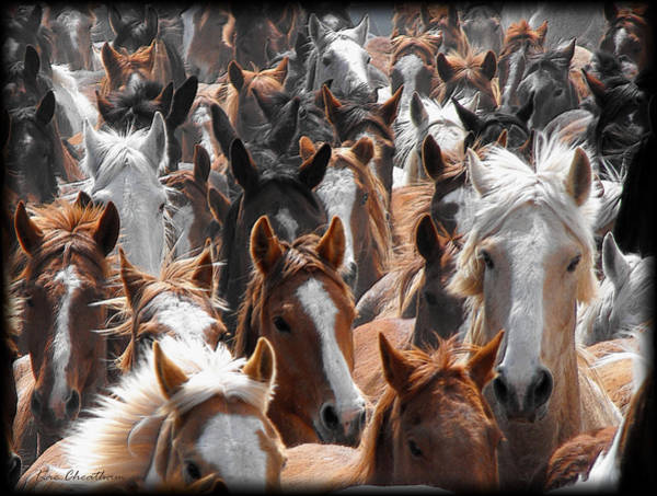 Horse Faces Poster