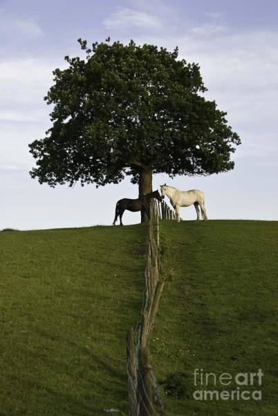 Horse Whisperers   Poster