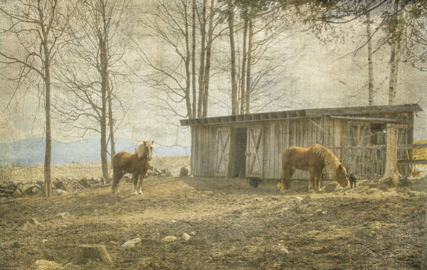 Horses On The Farm Poster