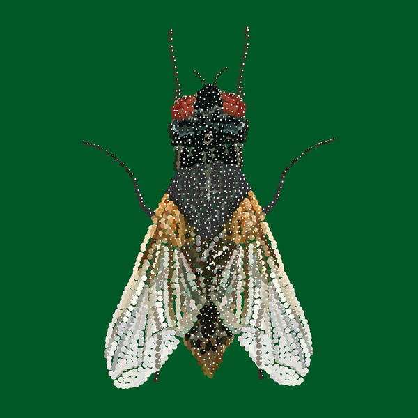 House Fly In Green Poster