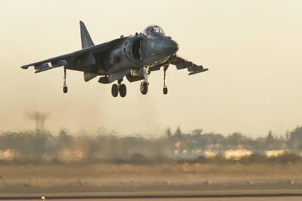 Hovering Harrier Poster