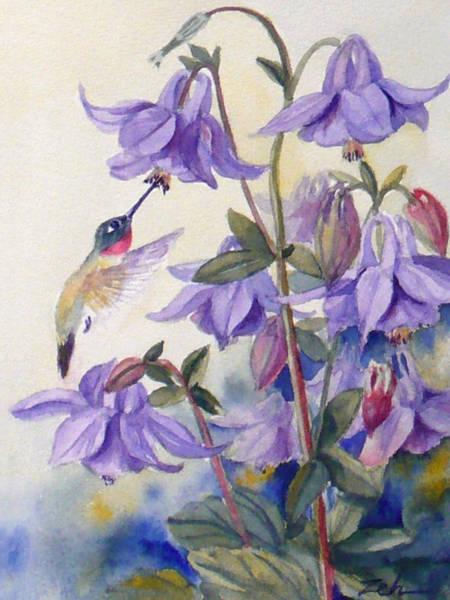 Hummingbird And Purple Columbine Poster