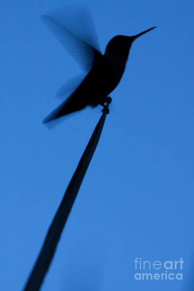 Poster featuring the photograph Hummingbird Silhouette by John Wadleigh