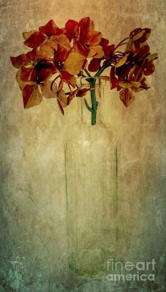 Hydrangea Poster