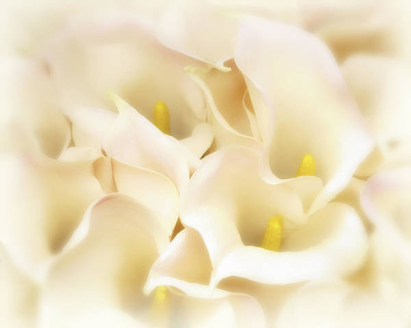 Poster featuring the photograph I Dreamed Of Calla Lilies by Gigi Ebert