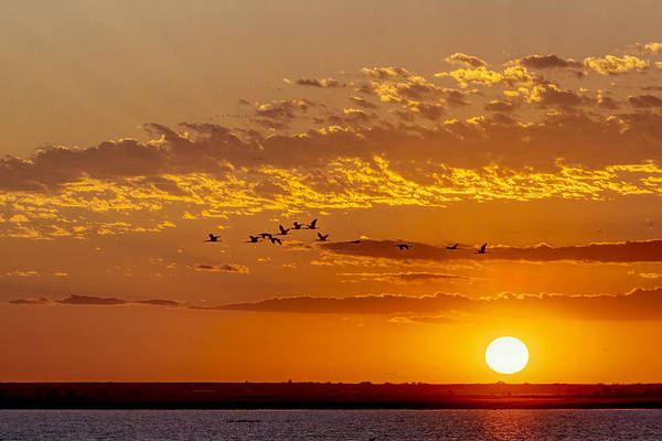 Poster featuring the photograph Ibis Flyover At Sunset by Rob Graham