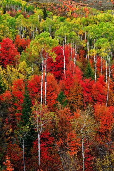 Idaho Autumn Poster