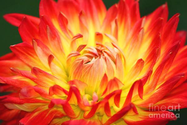 Img 0023 Flor En Rojo Detalle Poster