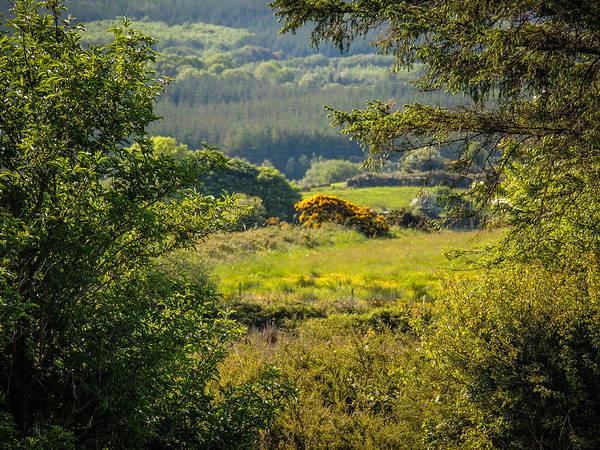 Irish Countryside In Spring Poster