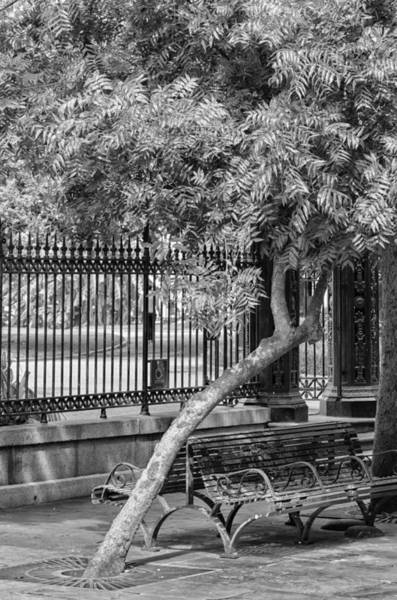 Jackson Square Bench And Tree Poster