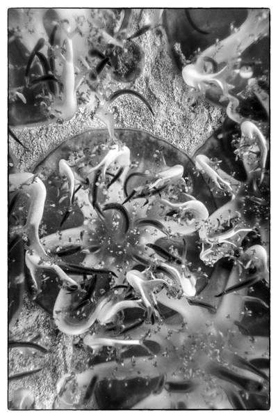 Jellyfish Upclose Poster