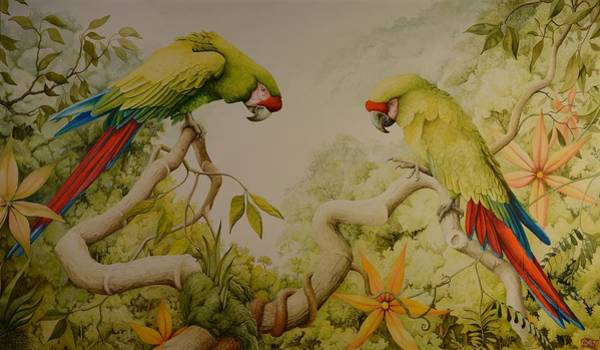 Jewels Of The Rain Forest  Military Macaws Poster