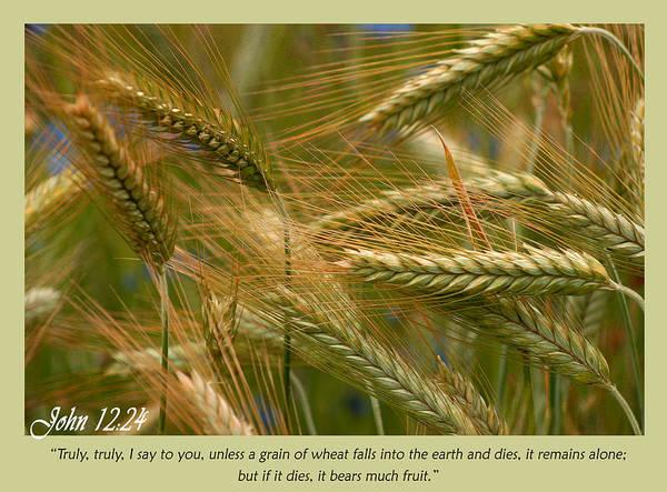 John 12 24 Poster