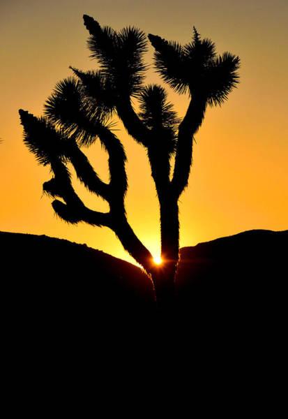 Joshua Tree Sunset Poster