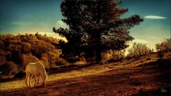 Springtime California Landscape Poster