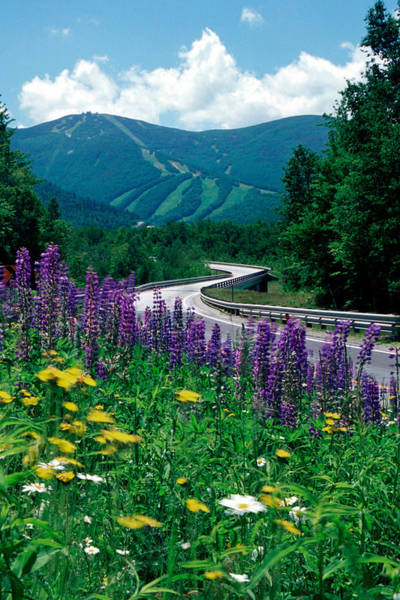 June In Franconia Notch Poster