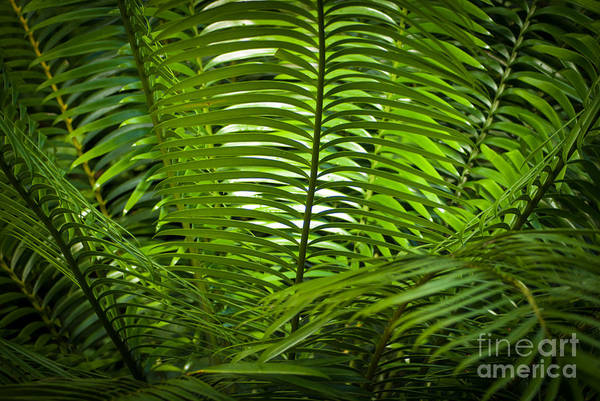 Jungle Fern Poster