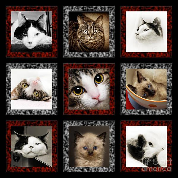 Kitty Cat Tic Tac Toe Poster