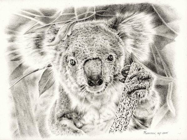 Koala Garage Girl Poster