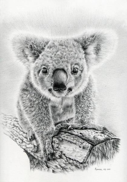 Koala Oxley Twinkles Poster