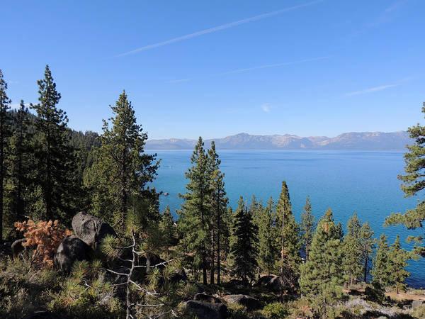 Lake Tahoe Through The Trees Poster