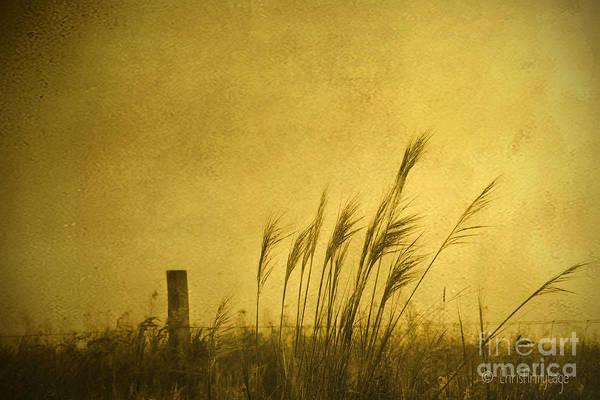 Land Of Stillness Poster