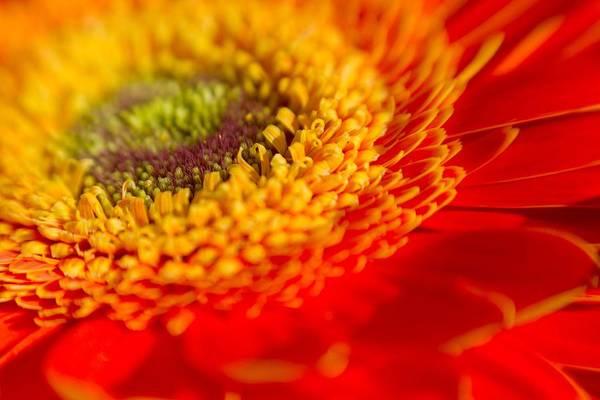 Landscape Of A Flower Poster