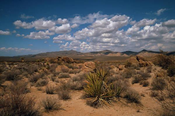 Landscape Of The Mojave Desert Poster