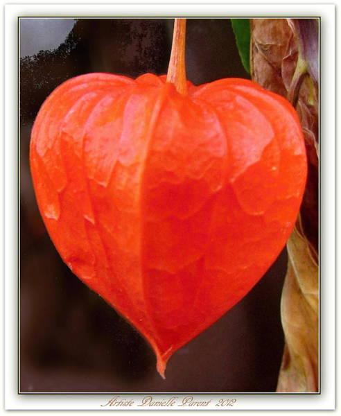 Lantern Flower Poster