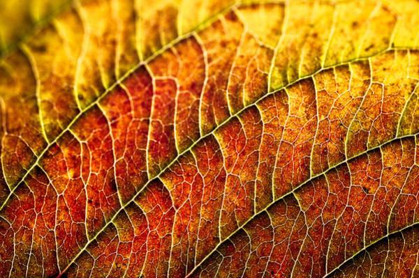 Leaf Rainbow Poster