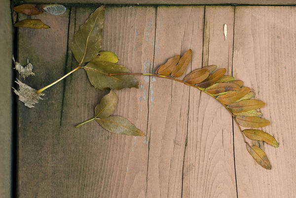 Leaves On A Wooden Step Poster