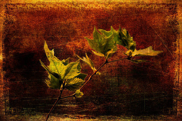 Leaves On Texture Poster