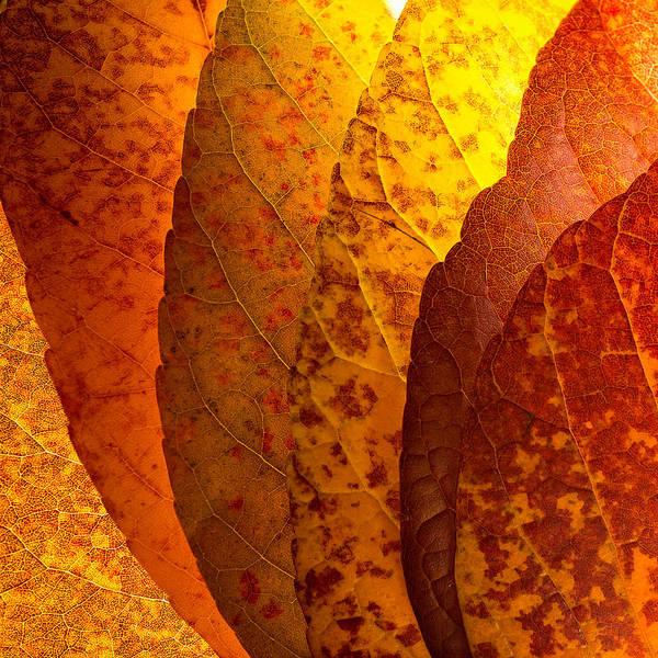 Leaves Unmasked Poster